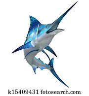 Marlin Fish on White