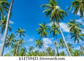 206 Le Tropicale 224 Exotique Vert Usines Et Noix Coco