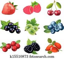 popular berries vector set