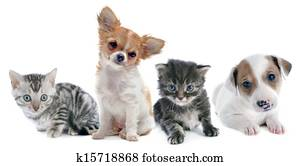 puppies and kitten