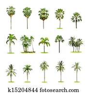 Set of palm and coconut trees