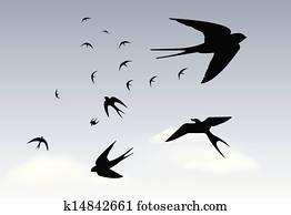 Swallows in the rain sky