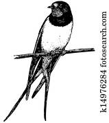 vogel, scheunenschluck