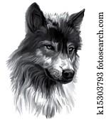 Wolf, illustration