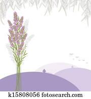 ラベンダー ベクター 1000 ラベンダー クリップアート Fotosearch