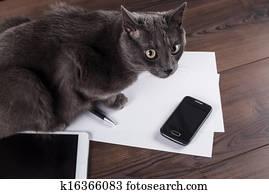 uomo affari gioco gatti cullano archivi fotografici 52