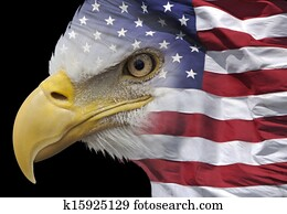Patriotic eagle portrait