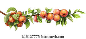 Ripe red apples on a branch