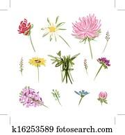 Set of garden flowers, sketch for your design