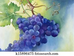 Watercolor illustration of grapes