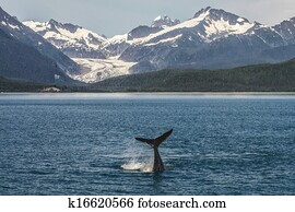 Baby Humpback in front of Glacier