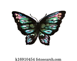 butterfly, watercolor design