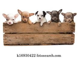 Crate full of dogs
