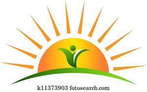 pflanze, in, sonnenaufgang