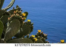 fügekaktusz kaktuszlevélo