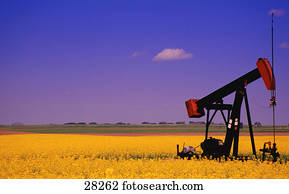Oil pump jack in canola field