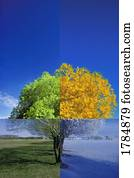 Tree in the four seasons