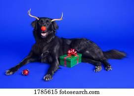 weihnachtsbilder hund stock fotos 1000 weihnachtsbilder. Black Bedroom Furniture Sets. Home Design Ideas