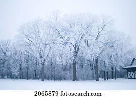 park, in, winterbilder, Assiniboine, park, winnipeg, kanada