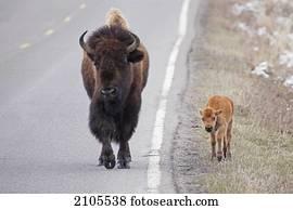 Fußboden Braun Buffel ~ Kostenloses foto zum thema braun dorf gummi