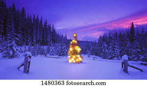 Christmas tree in the mountains at dusk British Columbia Canada