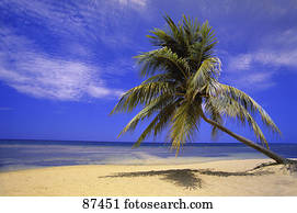 View of ocean from beach with palm tree