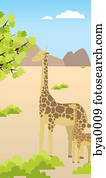 a, giraffe