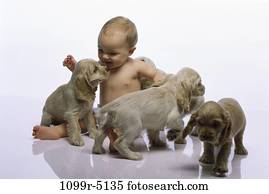 people, playing, puppies, baby, pets, playful, amused