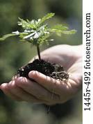 plant, hand, new, seedling, holding, gardening, body parts