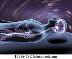 X-ray view of a man dreaming with view of brain and spinal cord
