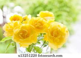 gelber rosen stock fotos und bilder gelber rosen suchen sie lizenzfreie bilder und. Black Bedroom Furniture Sets. Home Design Ideas