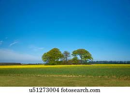 arbre paysage printemps saison paysage ciel nature banque de photos et d 39 images 54 326 arbre. Black Bedroom Furniture Sets. Home Design Ideas
