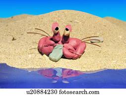Cancer:, krabbe, auf, a, sandstrand