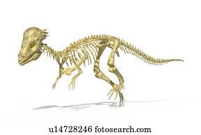 Pachycephalosaurus skeleton, artwork