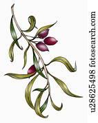 Branch of olives
