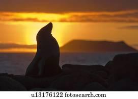 Linciare archivi immagini e foto linciare for Febbre da cabina grande orso lago ca
