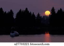 loon, sunset, Virginia, MN, Minnesota, World's largest