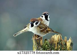 πραγματικό μεγάλο πουλί εικόνες XXX HD vidieos