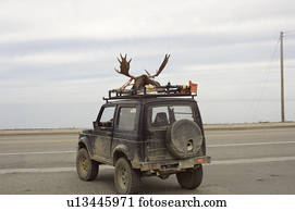 Moose Head Stock Photos Our Top 1000 Moose Head Images