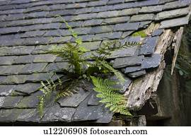 Close Up Of Shingled Roof And Dormer Window Stock Photo