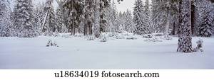 winterbilder, schneesturm, in, dass, see tahoe, bereiche