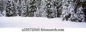 winterbilder, schneesturm