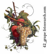 Antique Botanical Illustration of Grapes (hand-colored stipple engraving)., 1804
