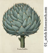 Antique Botanical Illustration of Artichoke (hand-colored copper engraving)., c. 1640